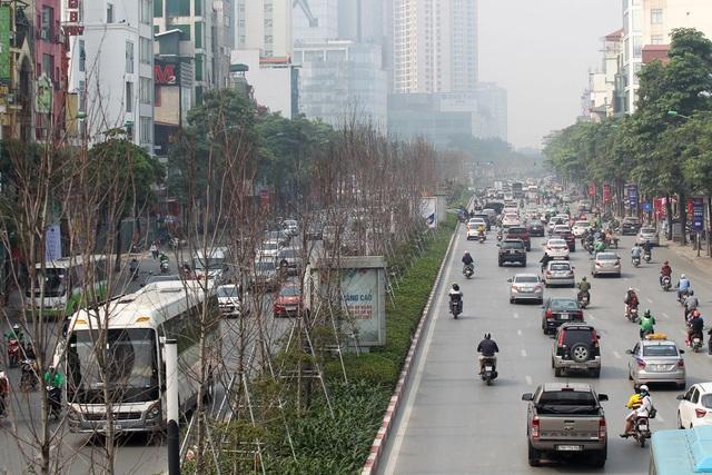 Cây phong lá đỏ trên đường Trần Duy Hưng và Nguyễn Chí Thanh