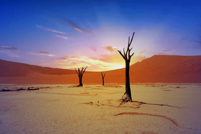 Những thân cây Acacia đã chết tạo nên khung cảnh độc đáo ở Dead Vlei, Namibia.