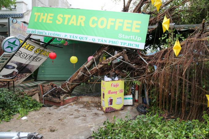 Gió giật mạnh trong mưa lớn rạng sáng 16/4 đã quật ngã cây sanh cao khoảng 15 m, đường kính 30 cm trước quán cà phê trên đường Đỗ Thừa Luông, quận Tân Phú