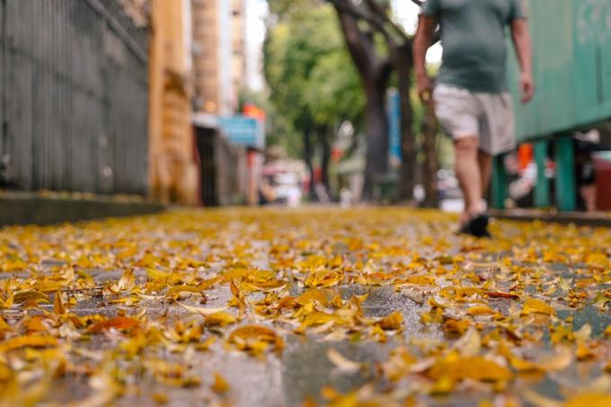 Thảm lá vàng kêu lạo xạo mỗi bước chân qua. Cũng bởi vì vẻ đẹp rất riêng ấy, người ta chưa kịp vội quét đi. (Ảnh: Minh Sơn/Vietnam+)