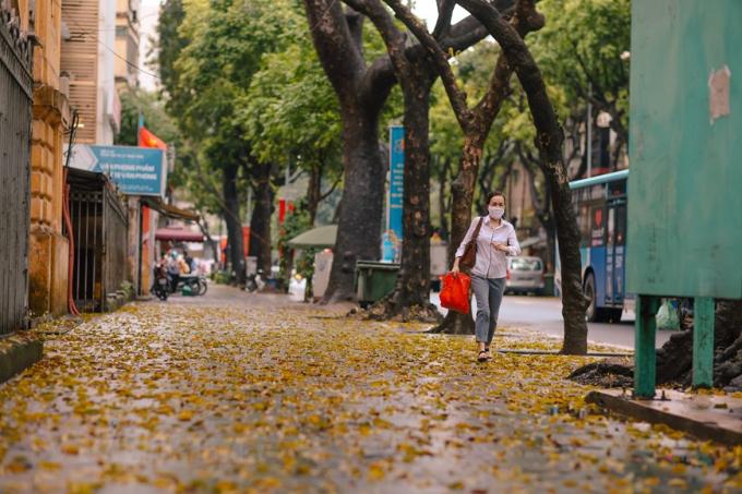 Cuối tháng 4, đầu tháng 5, Thủ đô vốn đã rất lãng mạn dưới mùa lá sấu rụng càng thêm phần tình thơ. (Ảnh: Minh Sơn/Vietnam+)