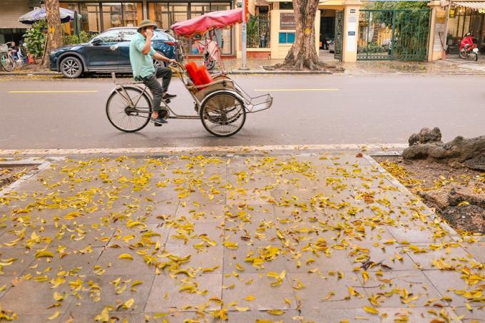 Hà Nội lúc này khoác lên mình một chiếc áo vàng ươm, thơ mộng. (Ảnh: Minh Sơn/Vietnam+)