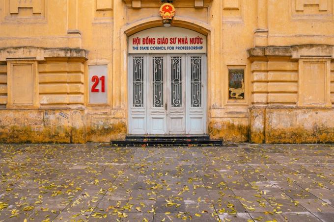Theo thời gian, lá sấu bay trở thành một nét đặc trưng của Hà Nội mỗi dịp giao mùa. (Ảnh: Minh Sơn/Vietnam+)