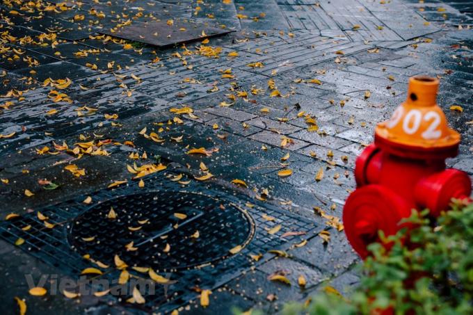Nhìn ngắm mùa lá vàng bay, bạn sẽ được cảm nhận trọn vẹn nét bình yên, dịu dàng của Hà Nội. (Ảnh: Minh Sơn/Vietnam+)