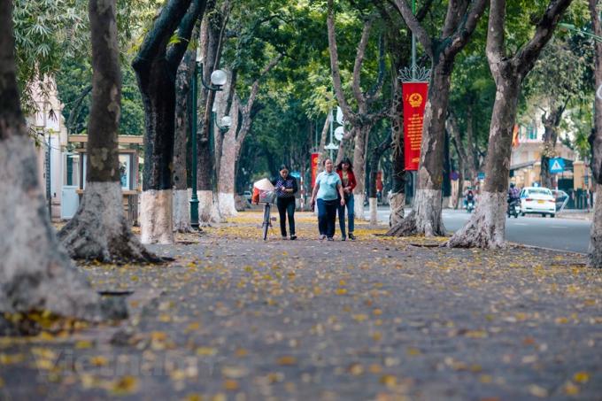 Bao giờ cũng vậy, trước khi vào hè, nhiều đường phố của Hà Nội như lạc vào tranh mùa thu với những thảm lá sấu rụng phủ kín bước chân người. (Ảnh: Minh Sơn/Vietnam+)