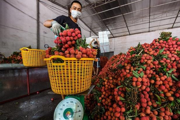 Giá bán vải thiều Bắc Giang tại TP.HCM lên tới 60.000 đồng/kg