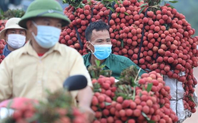 Bắc Giang đã tiêu thụ được hơn 100.000 tấn vải thiều