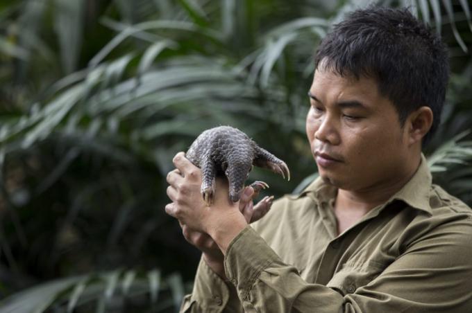Nhà bảo tồn Nguyễn Văn TháiThai-1623786361828