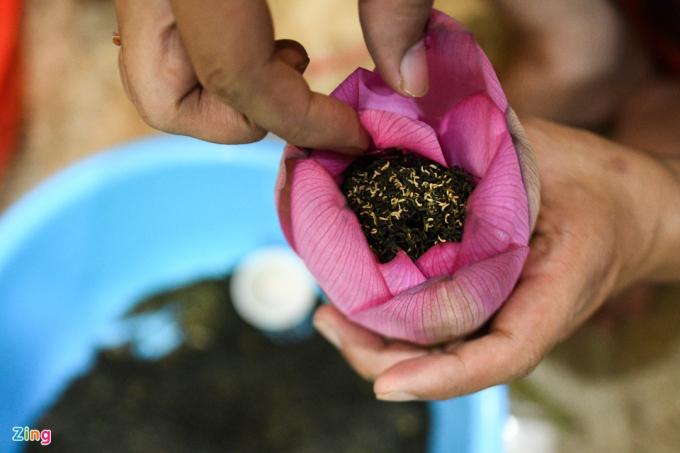 Tách cẩn thận từng lớp cánh, ông Thành đổ trà vào giữa rồi buộc chặt lại bằng lá sen. Bông trà sẽ tiếp tục được cắm nước một ngày rồi mới đưa vào bảo quản trong tủ lạnh. Trà sen cũng được chia làm 2 loại: trà thường có giá 35.000 - 40.000 đồng/bông, trà búp loại đặc biệt có giá 50.000 đồng/bông.