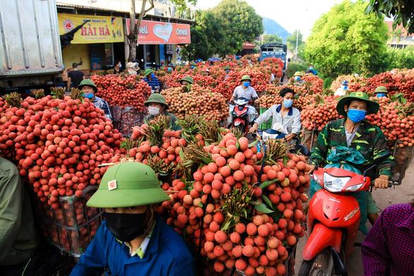Bắc Giang bán hết 215.000 tấn vải thiều, thu hơn 6.800 tỉ đồng