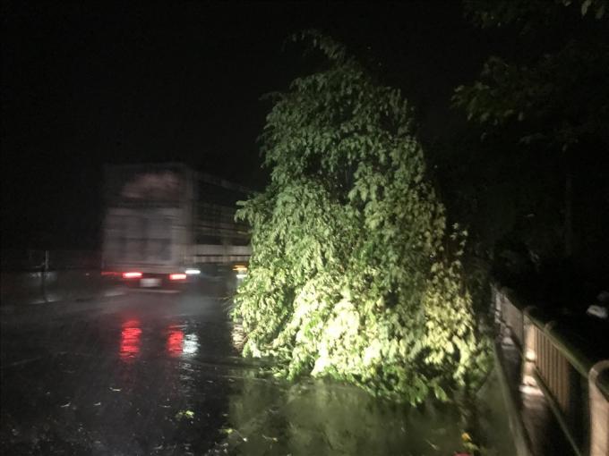 Tối ngày 30.10, gió thổi mạnh khiến nhiều cây cối nằm ngang giữa các con đường gây mất an toàn giao thông. Ảnh: laodong.vn