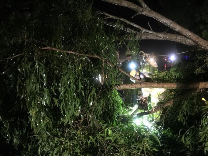 Tài xế xe tải cho biết: Khi đang lưu thông thì bất ngờ cây bên đường bị gió thổi ngã che khuất tầm nhìn, nên đã phanh gấp khiến xe khách húc vào sau. Ảnh: laodong.vn