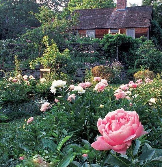 Ngôi nhà trong rừng đẹp như chốn thần tiên của nữ họa sĩ người Mỹ Tasha Tudor