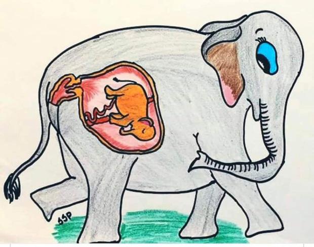Vụ voi mẹ mang thai chết vì ăn phải dứa nhét thuốc nổ, cộng đồng mạng chia sẻ những bức vẽ đầy cảm xúc