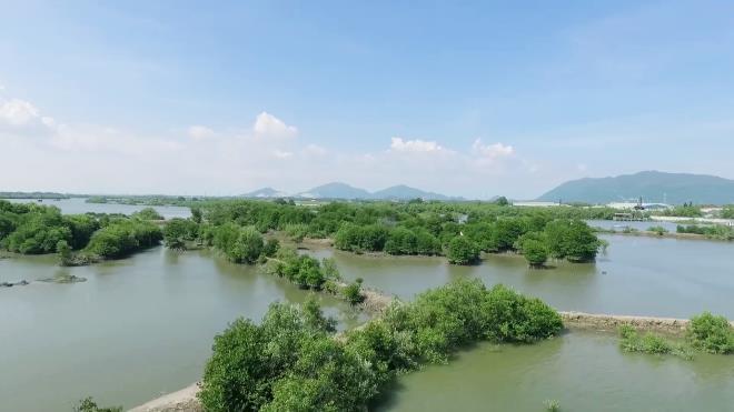 Mảng xanh đang dần hình thành ở từ những hàng đước do Quỹ 1 triệu cây xanh cho Việt Nam và Vinamilk trồng tại ven sông Chà Và, tỉnh Bà Rịa Vũng Tàu