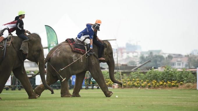 Mặc dù còn nhiều tranh cãi nhưng chơi polo trên lưng voi đem lại cảm giác mới lạ khác biệt thay vì chơi trên lưng ngựa truyền thống.