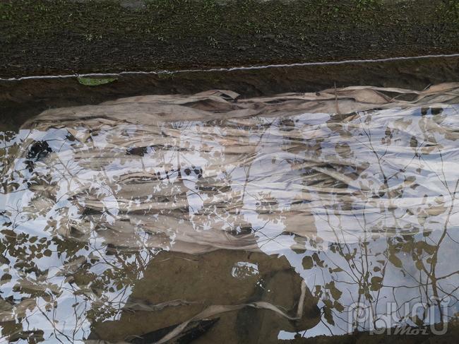 Sau khi bóc lớp vỏ đen bên ngoài, lớp vỏ trắng cây mạy sla được giữ lại rồi ngâm trong nước.
