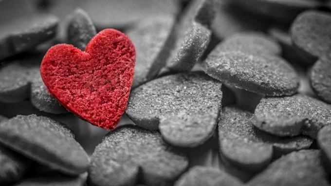 Tôi như cánh chim phiêu bạt, trải qua bao cuộc tình và không hề cố gắng vì tình yêu.