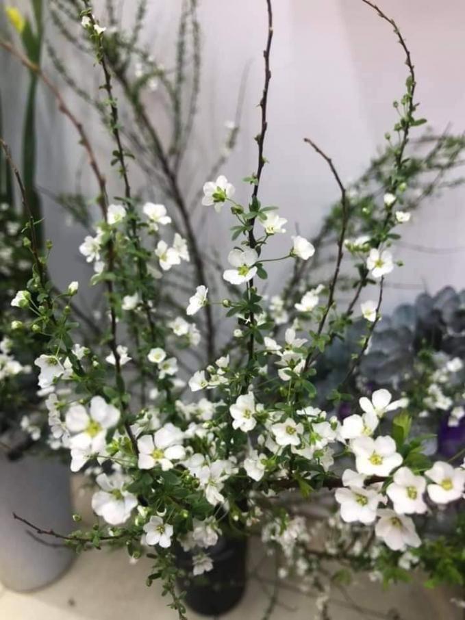 Buông mọi thứ như bông hoa nở, trạng thái tinh khiết sẽ ở ngay trong chính mình.