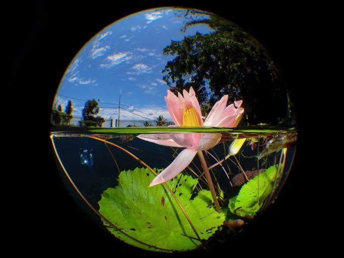 Vài bức ảnh đoạt giải tuyệt đẹp trong cuộc thi Nhiếp ảnh gia dưới nước năm 2020.