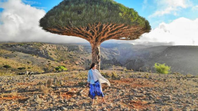 Khu vực phía nam của hòn đảo nổi tiếng với những chiếc cây như ngoài hành tinh (Ảnh:Eva zu Beck).