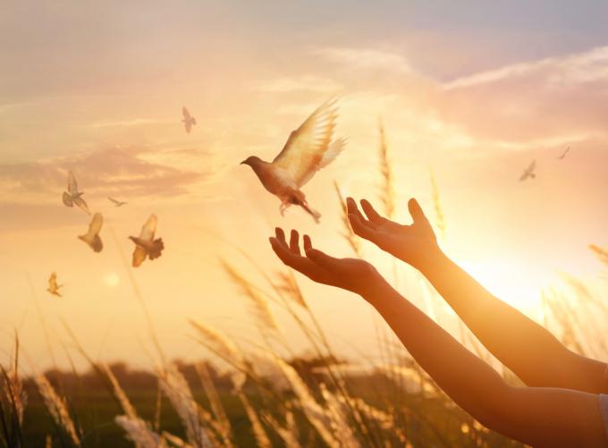Bình yên là khi ta có thể thực hành sự tha thứ. Cho mình và cho người...