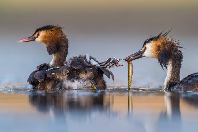 Bức hình chiến thắng của Giải nhiếp ảnh gia cuộc sống hoang dã năm 2020 hạng mục hành vi thuộc về nhiếp ảnh gia Tây Ban Nha Jose Luis Ruiz Jiménez.