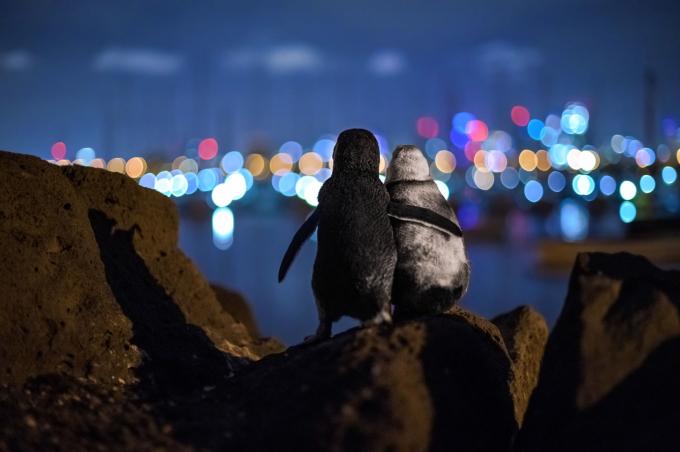 Bức hình đáng yêu của Tobias Baumgaertner chiến thắng hạng mục bình chọn của cộng đồng Giải thưởng Nhiếp ảnh đại dương.