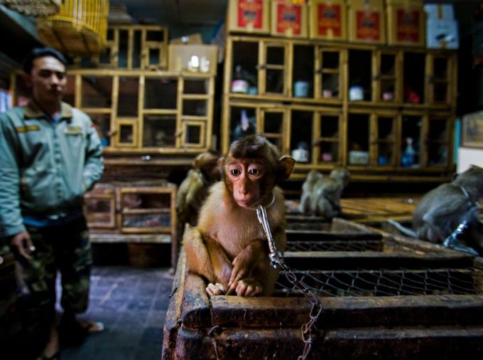 Bức ảnh của nhiếp ảnh gia hai quốc tịch Anh và Úc Paul Hilton giành Giải phóng viên ảnh giải thưởng nhiếp ảnh gia động vật hoang dã năm 2020.