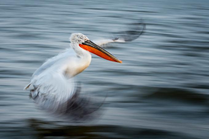 """Bức """"Nghệ thuật bay"""" của Alwin Hardenbol chiến thắng chung cuộc cuộc thi nhiếp ảnh Hội sinh thái học Anh năm 2020."""