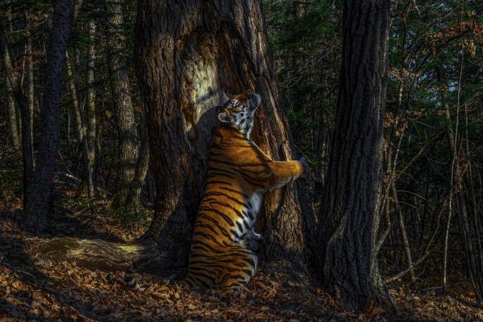 Những bức ảnh cuộc sống hoang dã đẹp nhất năm 2020