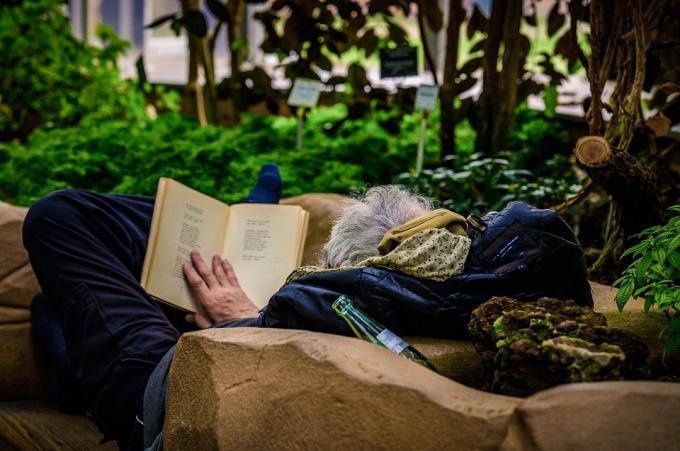 Người bái mộc thích không gian bóng râm, đọc sách và hòa cùng thiên nhiên (Ảnh minh họa:internet)