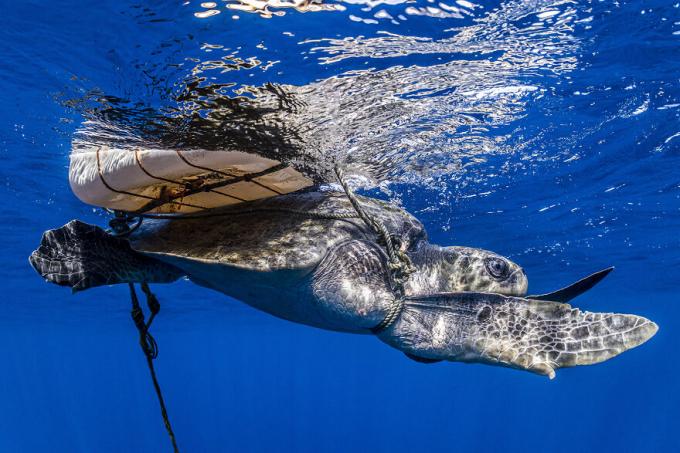 Nhiếp ảnh gia bảo tồn đại dương, Henley Spiers